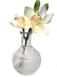 Cybidium in Glass Pot