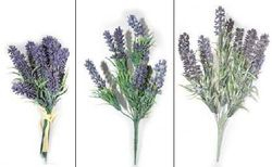 LavendEr Bush & Bundle
