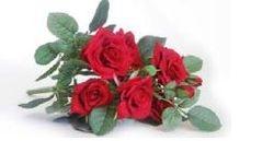 Ros Plant