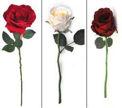Rose Brenda Ruby, Rose Jessica Bud
