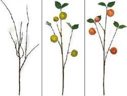 Twig & Apple Spray