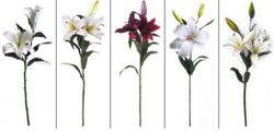 Lily's Various