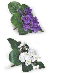 Violet Bush