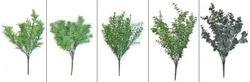Small Leaves Bush