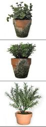 Potted Leavy Plants