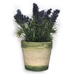 Small Potted Lavender