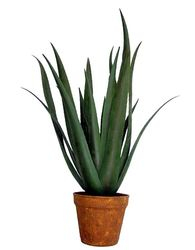 Plant medium Aloe Fero Green
