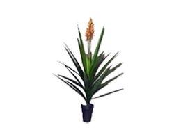 Plant medium Draceana Orange Flower