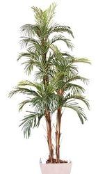 Robilini Palm  2 Stem