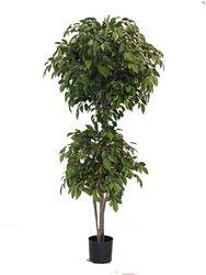 Natasja Ficus Tree