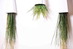 Long Grass in Boske