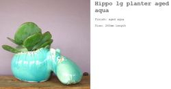 Hippo Aged