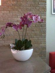 Kintra & Silk Orchid
