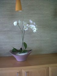 Vega & Silk Orchid