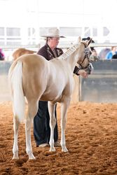 Splashy Rear view PHPA Qld show 2015