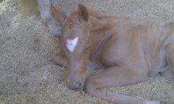 Tazzy sleeping.. supa cute