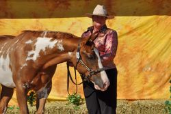2011 Qld Pinto Championships
