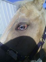 Splashy has 2 tone blue eyes