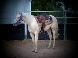 Roxy's first time with the Western Saddle