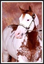 Sparky's Sire Justa Cowboy