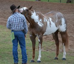 Hubby and Alphy having a moment before a class June 2013