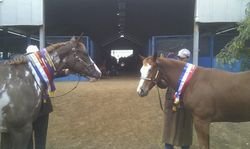 Brothers Alphy and Max Toowoomba Show 2013
