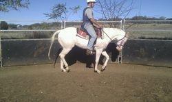 Barney being broken in ride #4