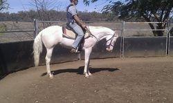 Barney under saddle