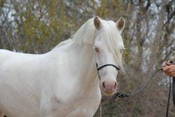 Dunlea Little White Dove