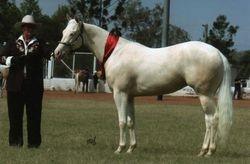 Dam: Dunlea White Oaks, National Champ White Horse Mare/Filly 2009