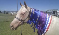 Dunlea White Oaks Allora Show 2014, 6 weeks after weaning Tassie off her.