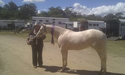 Roxy Grand Champion Local Led horse of the Show, Warwick 2014