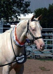 Charlies Dam Roxy Supreme Champion White Horse Toowoomba Royal 2010