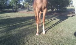 Sparky front legs 6mths
