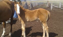 Sparky now 3 mths old, showing signs of being over 16hh