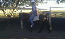 Missy Mounted and going well under saddle