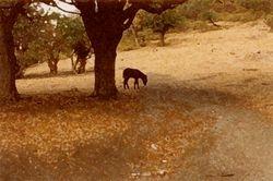 Carriacou (Dry Season 1)