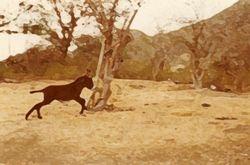 Carriacou (Dry Season 2)