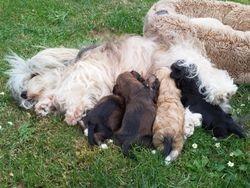 Moeder Fay en de pups