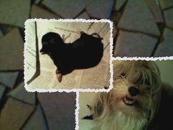 Fay en een zwart teefje