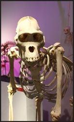 Naturhistoriskmuseum,  falle 13.
