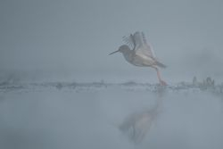 W gestej mgle