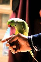 Birds has world in Afghanistan