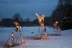 Amazing Fire Sculptures