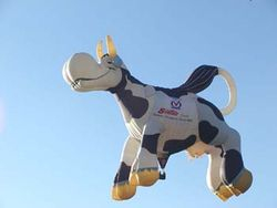 Cow Balloon