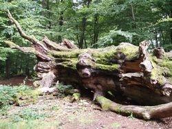 Sherwood of germany 1