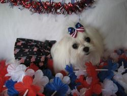 Feather celebrates the 4th