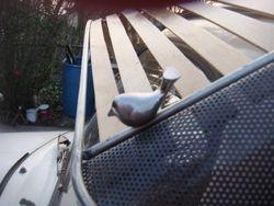 custom visor with doves