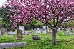 Jenkins Pamela Spring Splendor Cedar Grove Cemetery Norfolk
