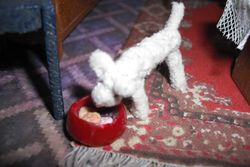 It is a wonder Bendy the dog is so thin,he loves his biscuits!